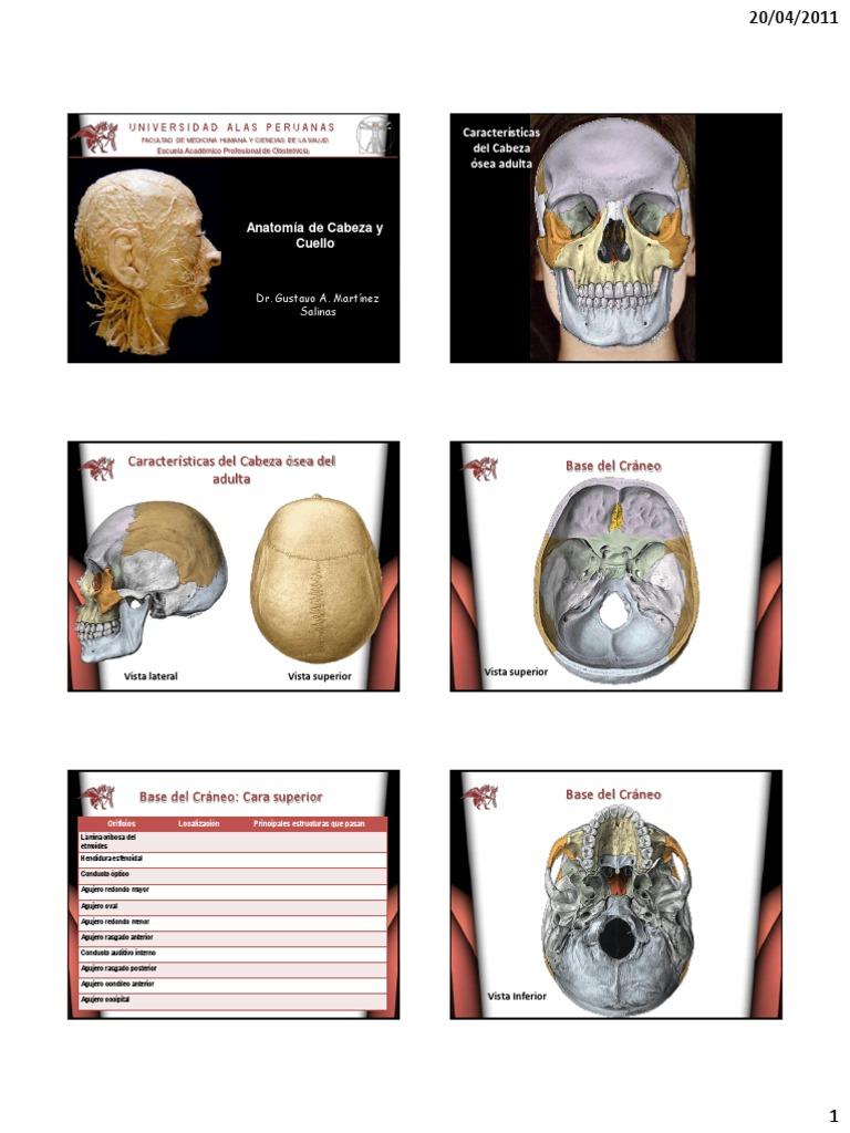 Anatomia UAP5[1]
