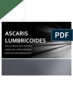 EXPOSICION ASCARIS LUMBRICOIDE