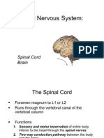 Lecture 13 - Central Nervous System