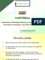 Ciclo Celular Clase 3 Fisiologia