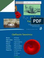 fisiopatología malaria