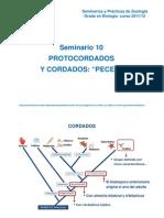 Seminario 10_PROTOCORDADOS Y PECES [Modo de ad