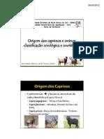 1º Aula estágio em docência_Origem dos caprinos e ovinos.