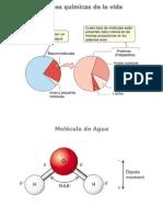 Biomoléculas (Animada)