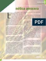 arroz_495 MATERIA ORGANICA