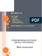 perkembangan Ontogeni Tingkat Vertebrata pada mencit (Mus musculus)