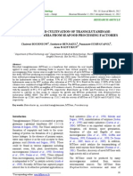 Screening and cultivation of Transglutaminase-producing bacteria