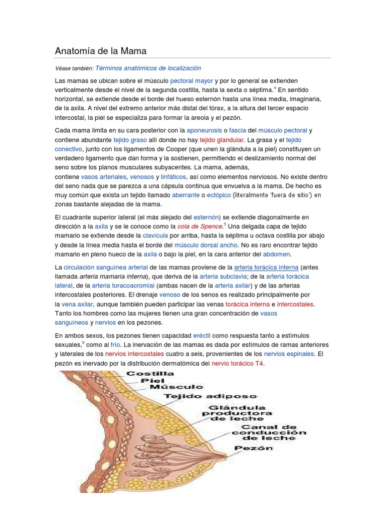 Anatomia Del Pezón