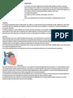 Anatomia y Fisiologia Del Sistema Cardiovascular