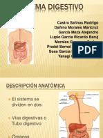 APARATO DIGESTIVO SEGUNDO FORMATO (café)