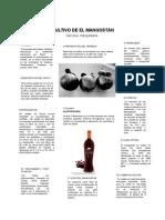 cultivo de mangostan_690