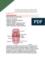 Anatomía fisiológica de las piezas dentales