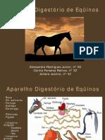 Anato - Aparelho Digestório de Eqüinos