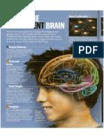 Inside the Adolescent Brain