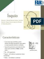 anatomia Ísquio