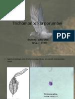 Trichomonoza La Porumbei