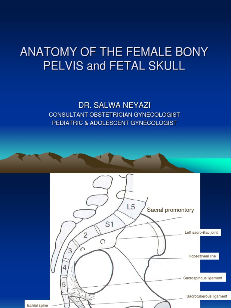 Anatomy Of The Female Bony Pelvis And Fetal Pelvis Skull