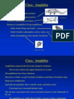 Lecture Notes3 - Amphibians
