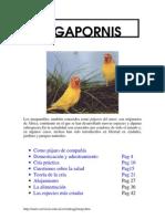 Manual de Agapornis