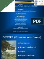 Sustratos Guinea y Melaza