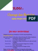 4. C-B NONMAMMAL