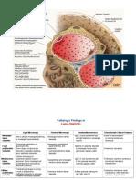 Lupus Nephritis Slides