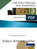 3. kultur zooplankton