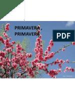 Prim Aver A