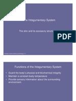 Microsoft Power Point - Integumentary System 2