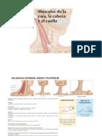Musculos y Kinesiologia Para Quiromasaje