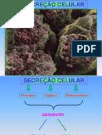secrecao_de_macromoleculas
