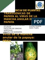 RESISTENCIA DE PLANTAS TRANSGÉNICAS DE PAPAYA AL VIRUS DE LA MANCHA ANULAR DE LA PAPAYA