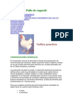 Pollo de engorde
