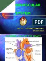 05 Cardiovascular System Ppt 3620