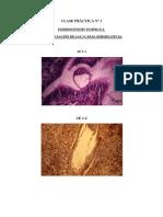 Diapositivas Microanatomia.