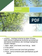 5. Taksonomi Alga