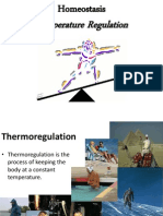 Homeostasis Temperature Regulation