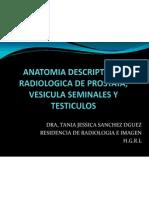 Anatomia Descriptiva y Radio Logic A de Prostata, Vesicula