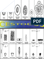 ATLAS DE PARASITOLOGIA-CESTODOS-
