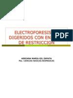 Enzimas de Restriccion Genetica Micro y Bact Udes