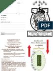 CCBBBB Horse Extravaganza Application Form