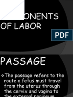 Components of Labor1