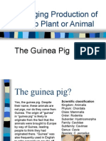 Changing Production of a Crop Plant or Animal - The Guinea Pig