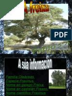 FREIXA, TRABALLO REALIZADO POR PABLO