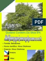 AMIEIRO, TRABALLO REALIZADO POR GUSTAVO