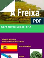 FREIXA, TRABALLO REALIZADO POR SARA