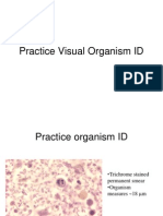 Practice Visual Organism ID Merged
