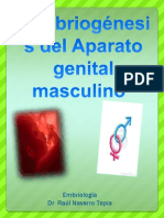 Embriogénesis del Aparato genital masculino