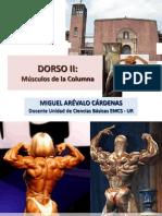 UR DorsoII Musculos-Columna2