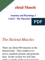 Sistem Otot Muskular 1 (Muscular System)